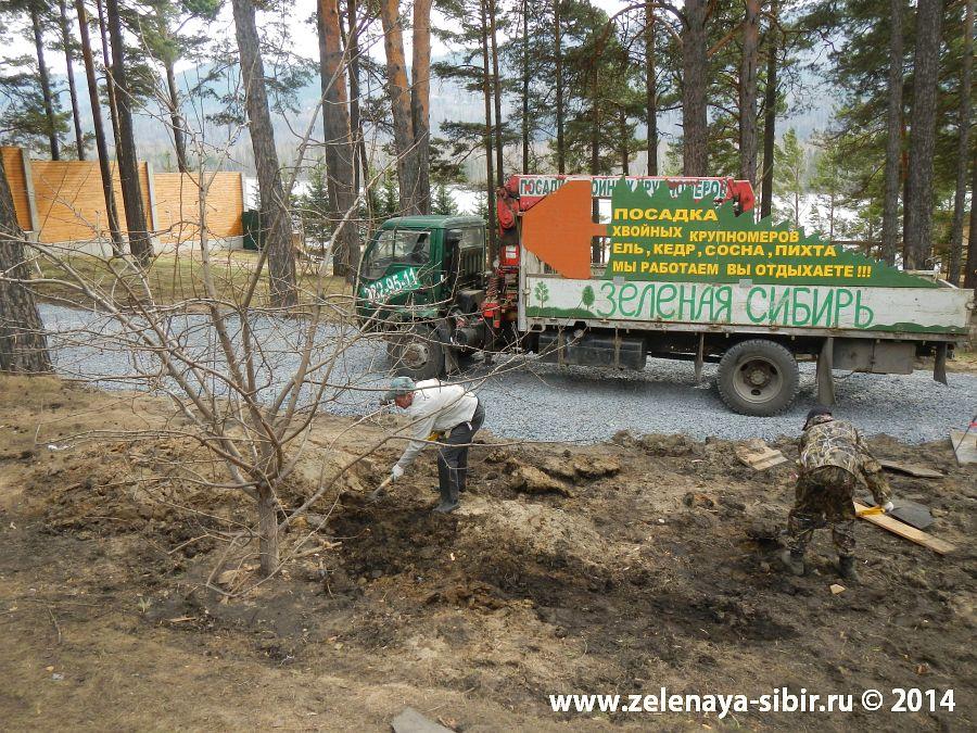 Посадка и полив крупномерных лиственных деревьев в Красноярске