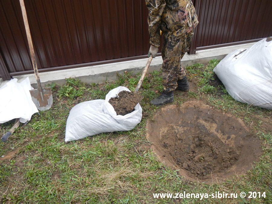 Посадка елочек в Красноярске компанией Зеленая Сибирь