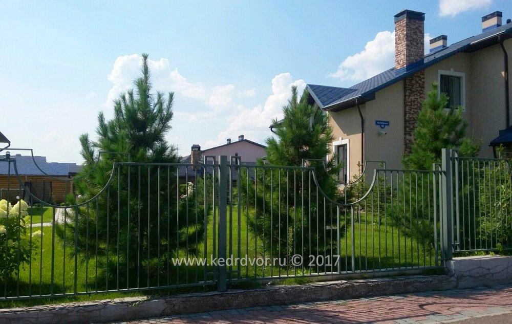 Посадка кедров в Английском Парке в Красноярске zelenaya-sibir.ru