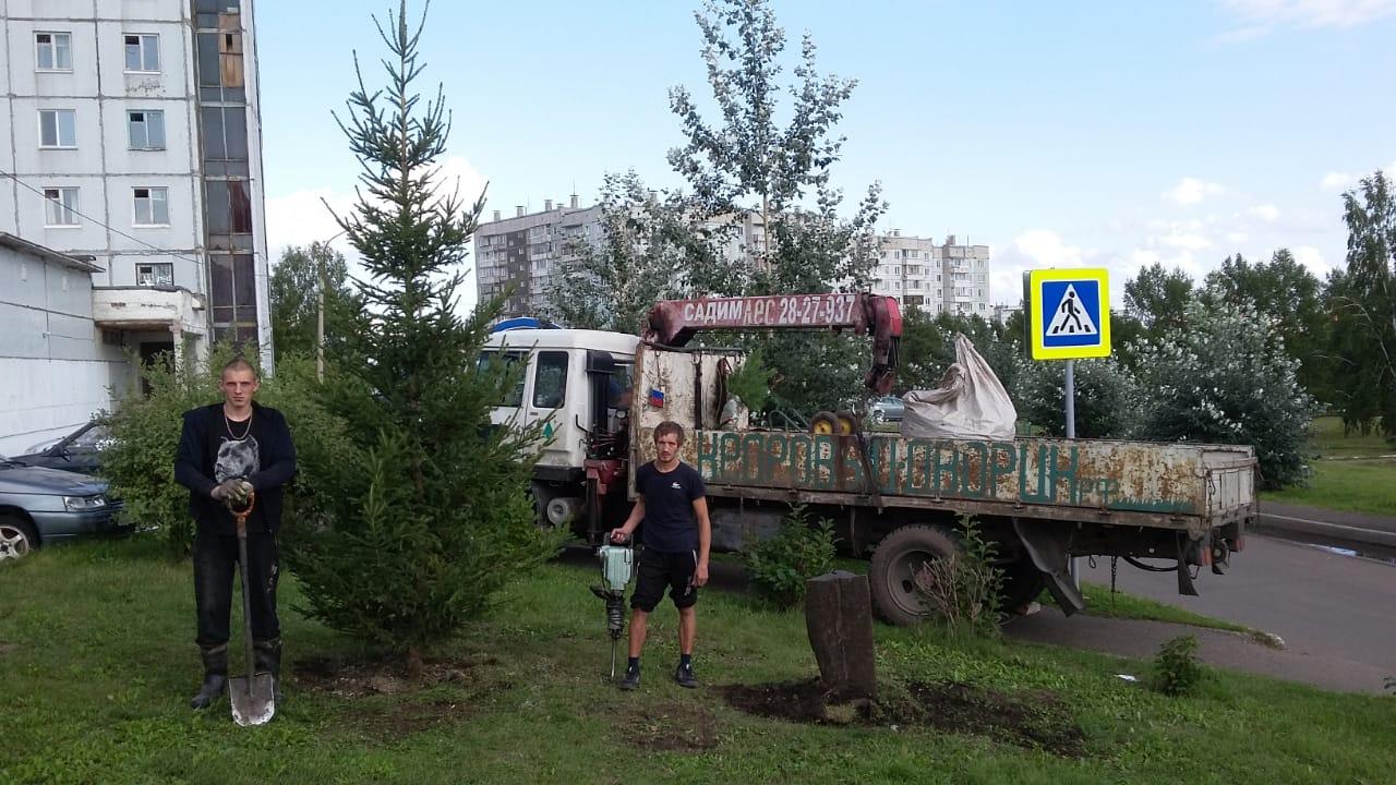 Посадка ели в Аграрном университете в Ветлужанке